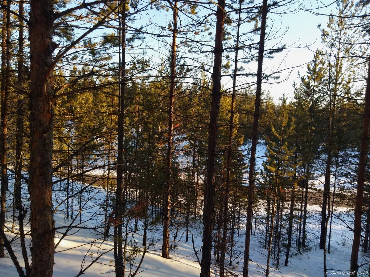 Трасса в лесу
