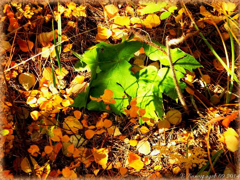 Последний лист зеленый