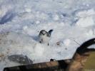 Птичка на льду Байкала