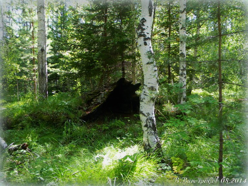 Нора в лесу