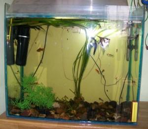 Клеим аквариум сами. Готовый аквариум.