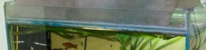 Ребро жесткости аквариума