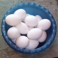 Яйцо куриное в Улан-Удэ