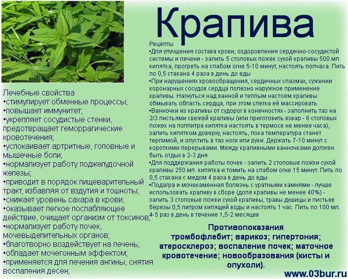 зеленая аптека. Крапива
